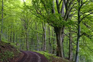 Buchenholz für Holzbausteine